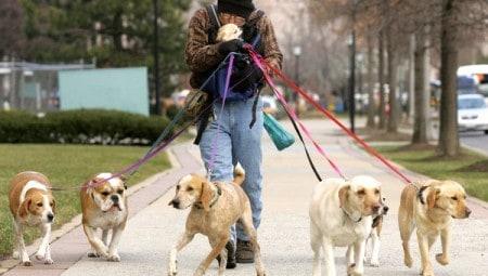 бизнес по выведению собак на прогулку