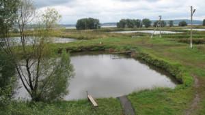 Выбор водоема для разведения рыбы